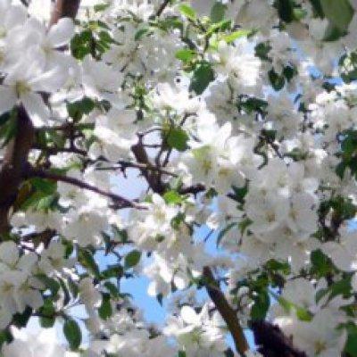 Яблоневый сад раскинется возле Дома сопровождаемого проживания